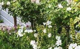 Garden of the week: Layered loveliness in Wellington