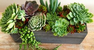 Image of Wooden Succulent Centerpiece