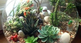Image result for succulent gardening
