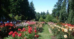 International Rose Garden, Portland, Oregon