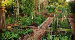 Looking For More Information On Organic Gardening? Consider These Ideas