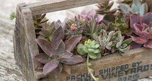 Make a Succulent Container Garden In Just About Anything