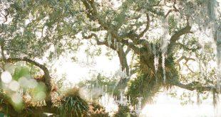 Marie Selby Botanical Gardens Wedding