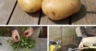 Richtige Gartenarbeit spart Ihnen viel Zeit und Geld. Werfen Sie einen Blick auf...