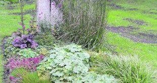 Stauden boomen: bei Hobbygärtnern löst die vielseitige Pflanzengruppe selbst i...
