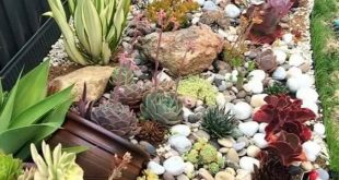 Sweet succulent border of rocks and ruffled echeveria, agaves, aeoniums, aloes a...