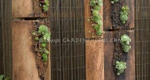 Vertical succulent garden. Click through the pictures in the link. Lots of nea