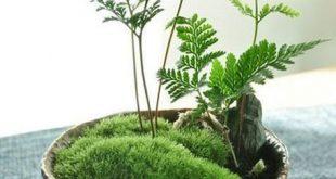 Wicked 23 Mini Succulent Garden decorisme.co / ... Wenn Sie eine süße und ... ...