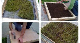 Wie baut man einen Pflanzentisch aus Sukkulenten einem Gemüsegestell